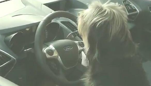 Hỗ trợ đỗ xe chủ động của Ford: Thật dễ dàng một con chó có thể làm điều đó